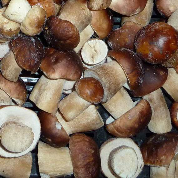 замороженный гриб подосиновик