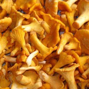 замороженные грибы лисички