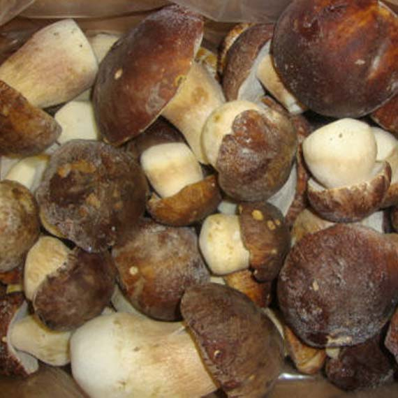 замороженный гриб польский